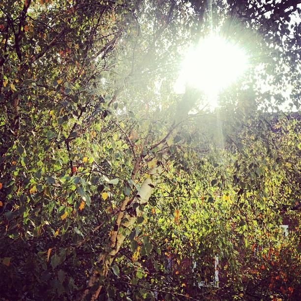 Hommage an den Herbst
