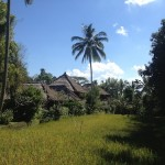 Durchbruch zum Ananda-Kosha: Teacher Training auf Bali (1)