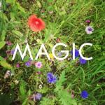 4 Tipps für etwas mehr Magic in deinem Leben